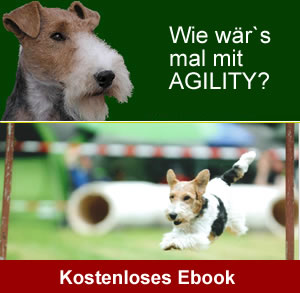 agilty-ebook