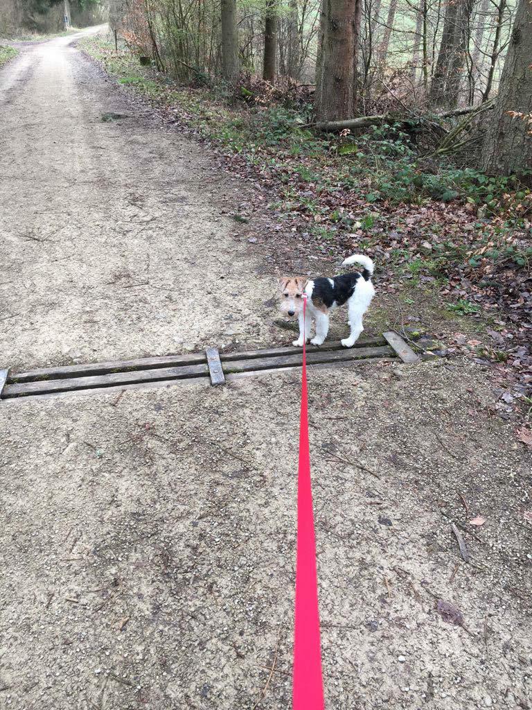 Timmy auf Entdeckungsreise in Luxembourg › Foxterrier Haitz