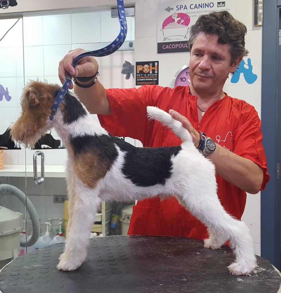 Jimmi als Junghund